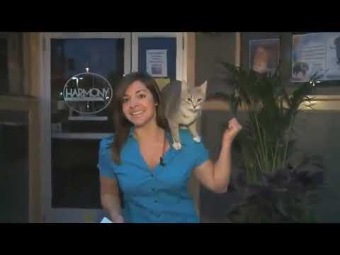 приколы с животными  смешные приколы  смотреть приколы онлайн  видео про котов Hd720