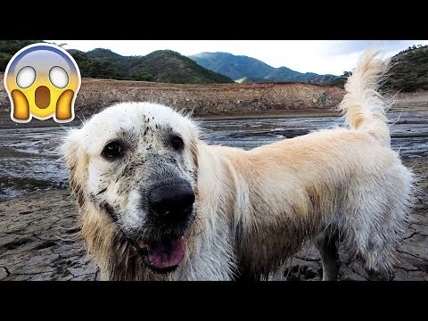 What Does My Dog Do When He Sees Mud Puddles