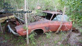 Dodge Challengers buried deep in the Woods