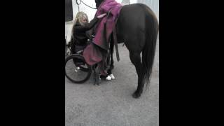 Amberley Snyder: Wheelchair Wednesday #6: Putting a blanket on my horse