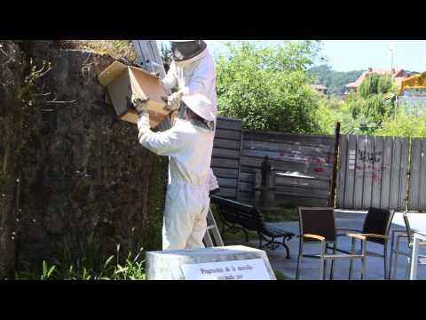 Retirado por Bomberos de Villaviciosa un  enjambre   en la antigua muralla   Villaviciosa