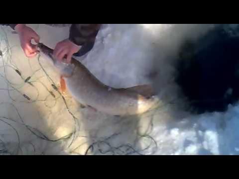 сетка для ловли рыбы с дугами