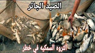 صيد الاسماك بالمحير  #السلفر +الكارب
