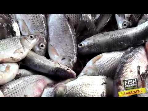 FishHungry инструкция по применению приманки