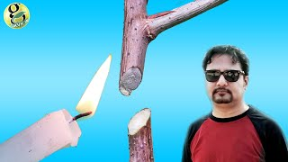 PLANT SURGERY | When and How + Types of Pruning in Home Gardening