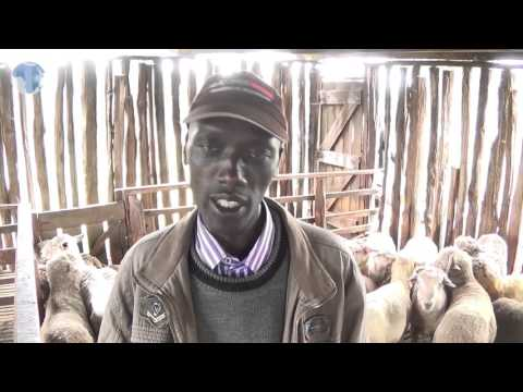 Sheep Farmers On County Government To Buy Wool