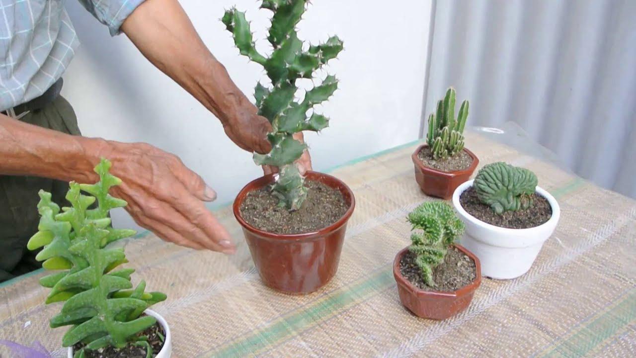 5 suculentas raras cactus y crasas youtube for Cactus tipos y nombres