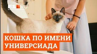 История кошки Универсиады – неофициального символа 2023 года