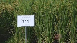 Rice Soil Test - Arkansas Farm Bureau