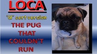 "Loca The Pug 'g' & Or 'u' Rated Version  ""the Pug That Couldn't Run"""