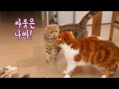 귀엽게 싸움 말리는 고양이 이즈