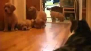 anjing lawan kucing