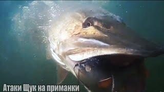 Рыбалка Самые ЗРЕЛИЩНЫЕ АТАКИ Больших Гигантских ЩУК на разные приманки Подводная съёмка