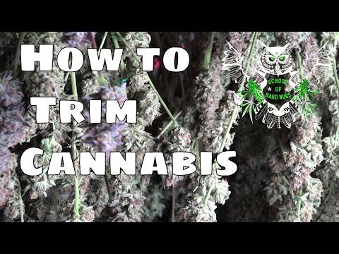 How to Trim Cannabis | How to trim weed | Trimming Marijuana