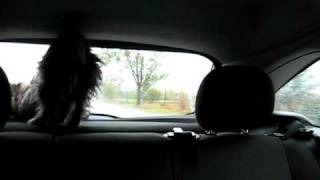 Mackenzie The Cairn Terrier...and The Windshield Wiper