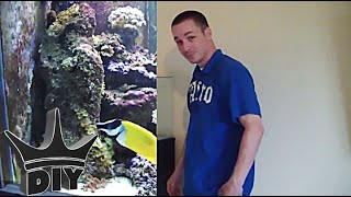 How To: Set Up A Saltwater Aquarium