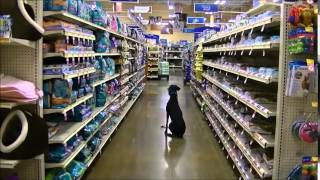 Roxy Off Leash Training Inside Petsmart Zbb K9 Team