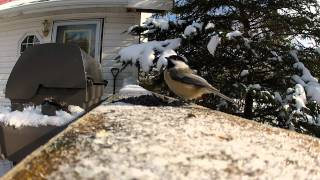 Gopro Bird Feeding