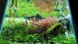 【アクアリウム】30cm水草水槽 トリミングで綺麗なラインを作る!