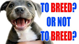 TO BREED? OR NOT TO BREED? THAT IS THE QUESTION  THE PROS AND CONS OF BREEDING DOGS  2020