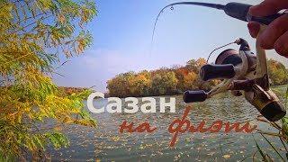 Река. Флэт. Сазан. Осень... Ловля карпа в реке, по холодной воде на флэт.