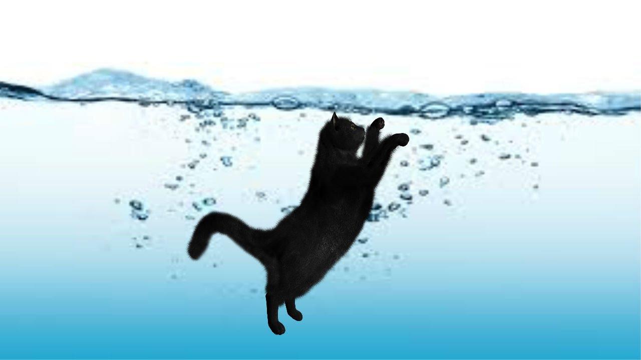 Mèo đuối nước và ngạt thở