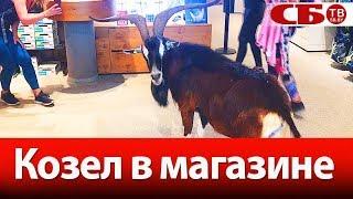 Зачем козел пришел в спортивный магазин? | веселое видео