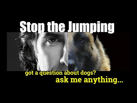 How Do I Stop My Dog from Jumping on People