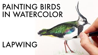 Sketching a lapwing in watercolor   iridescent feathers painting tutorial