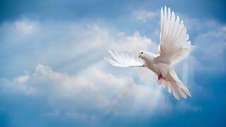 Hoang mang và sợ hãi không đến từ Thiên Chúa - Ảnh Phép Lạ Chúa Giêsu