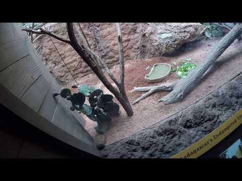 Madagascar exhibition at the Bronx zoo