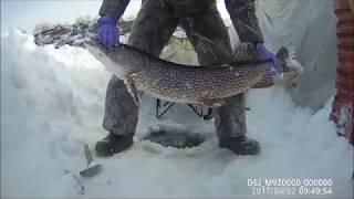 Кльова рибалка РС (Я) Жиганск