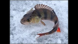 Рыбалка на окуня бешенный мотерый окунь клюет как с пулемета