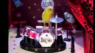 Смешные Попугаи! Попугаи И Кошки!