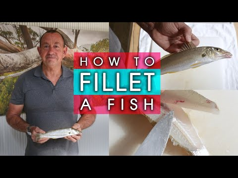 How To Fillet A Fish - ( BONE FREE ! )