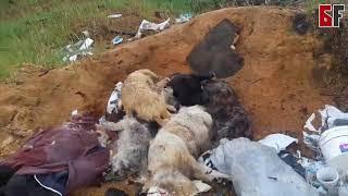 Стали известны некоторые подробности истории с мертвыми собаками на свалке возле Белорецка