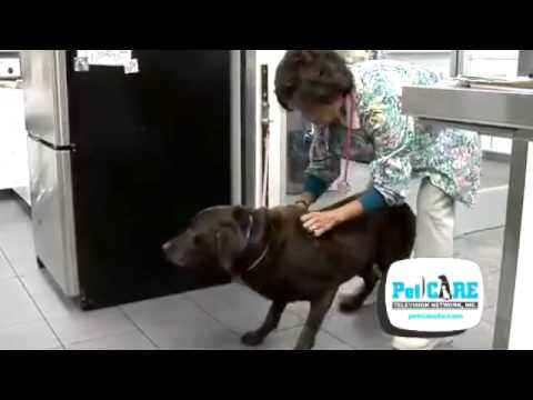 Degenerative Disc Disease In Dogs