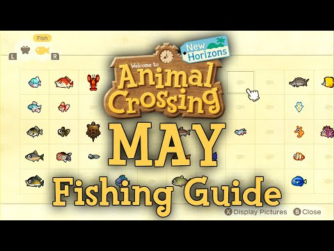 MAY Fishing Guide - How To Catch All New Fish | Animal Crossing: New Horizons