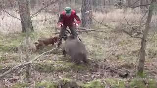 Охота на кабана Приколы Охота и рыбалка