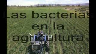 Dominio Bacteria_0001.wmv