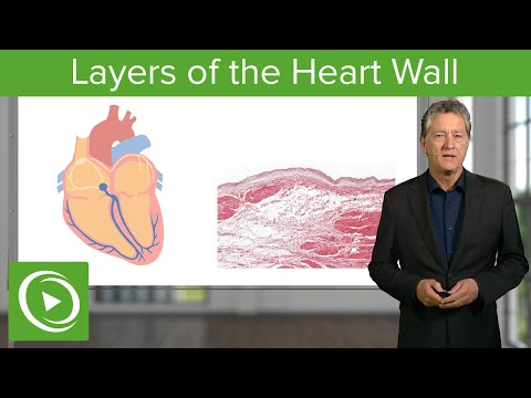 Layers of the Heart Wall  – Histology | Medical Education Videos