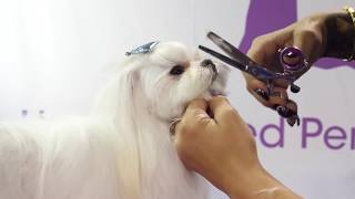 Asian Fusion Style Pet Trim by dog groomer Laura Jane Taylor