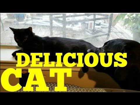 Delicious Cat