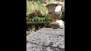 Мальтийские кошки в туристическом объективе Оксаны Марченко