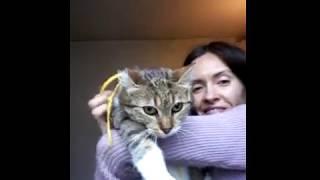кошка Муся- крысоловка. Ищет дом. СПб