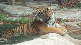 Sở thú - Đại Nam Bình Dương (ngày 11/2/2016)- Ngày chung đôi (Văn Mai Hương)