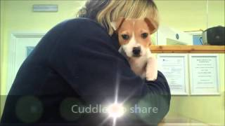 """Dogs Trust Kenilworth """"take Over"""" - A Day In The Life"""