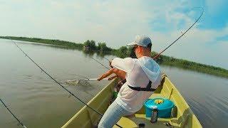 ВОТ ЭТО КЛЁВ! ОГРОМНЫЕ сазаны УТАСКИВАЮТ удилища! Рыбалка на СОМА на КВОК. Съедобные ЛОТУСЫ
