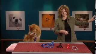 Prevent Pulling On The Leash -- Train Your Dog Like A Pro Dvd: Perfect Paws Bonus Content