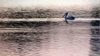 Pelican sail sojourn on jakkur lake, near GKVK Bangalore